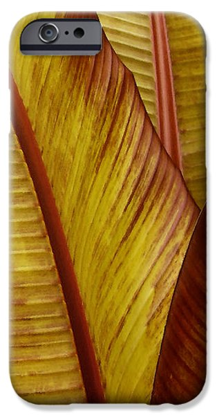 Abstractions iPhone Cases - Repose - Leaf iPhone Case by Ben and Raisa Gertsberg