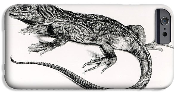 Iguana iPhone Cases - Reptile iPhone Case by English School