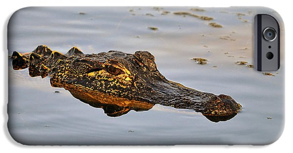 Alligator iPhone Cases - Reptile Reflection iPhone Case by Al Powell Photography USA