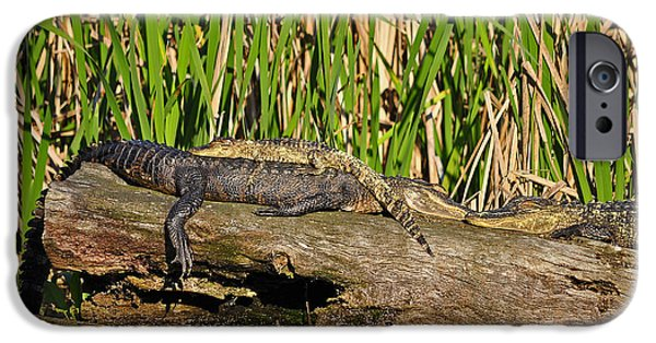 Big Al iPhone Cases - Reptile Relaxation iPhone Case by Al Powell Photography USA