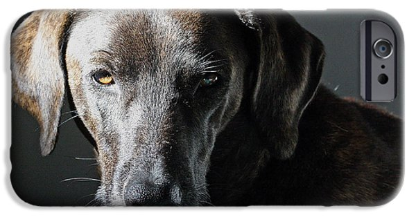 Rescued Greyhound iPhone Cases - Rescue Dog - Osa iPhone Case by Peggy Collins