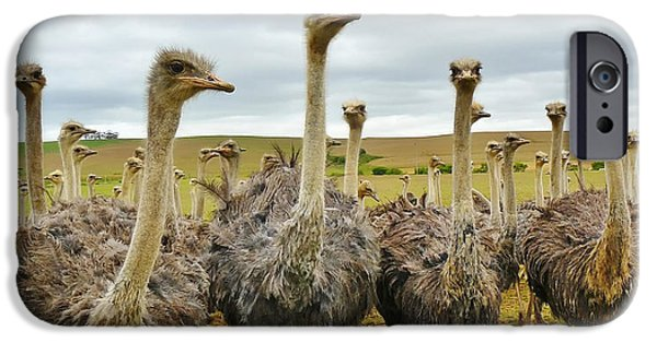 Ostrich iPhone Cases - Residents of an Ostrich Farm iPhone Case by Mountain Dreams