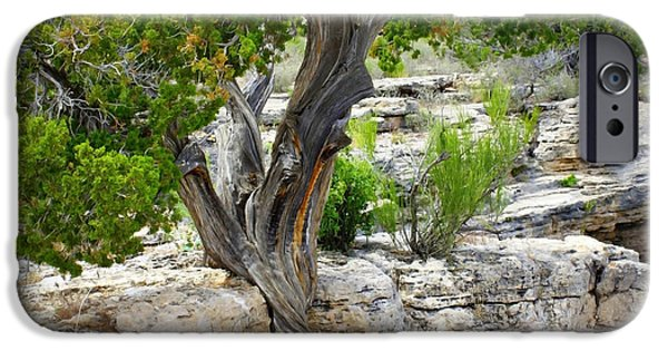 Resilience iPhone Cases - Resilient Tree iPhone Case by Carol Groenen