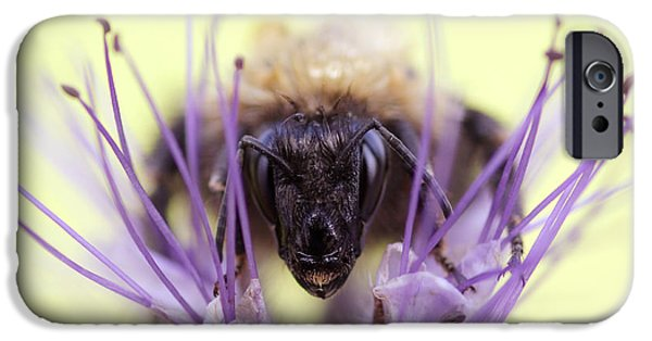Bee iPhone Cases - Resitance is Futile iPhone Case by Roeselien Raimond