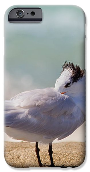 Resting at the Beach iPhone Case by Kim Hojnacki