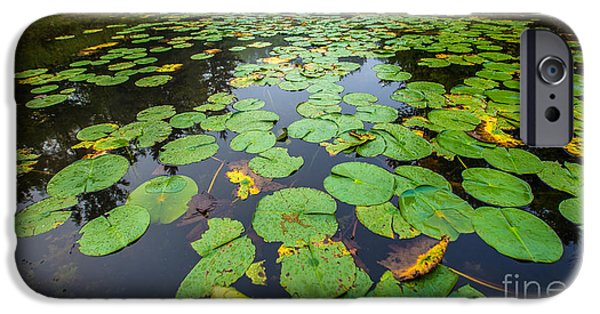 Bayside iPhone Cases - Resting Lilly Pads iPhone Case by Andrew Slater