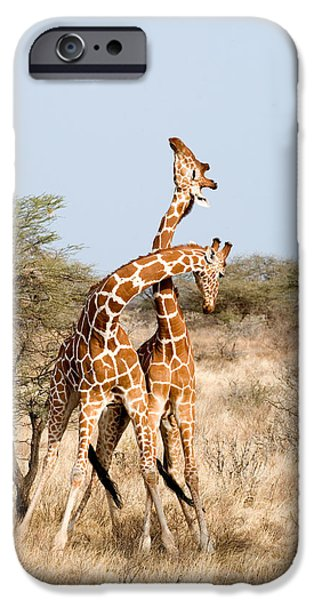 Bonding iPhone Cases - Reticulated Giraffes Giraffa iPhone Case by Panoramic Images