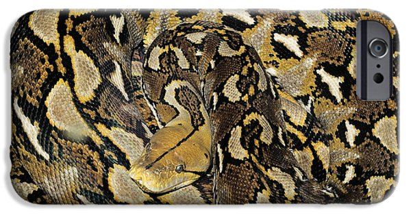 Burmese Python iPhone Cases - Reticulated Python iPhone Case by Nature