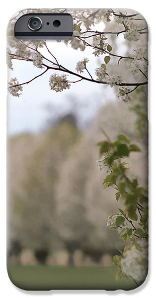 Timeless Design Paintings iPhone Cases - Return To Spring iPhone Case by Debra     Vatalaro