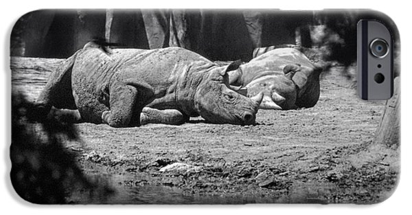 Rhinocerus iPhone Cases - Rhino Nap Time iPhone Case by Thomas Woolworth