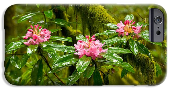 Close Focus Nature Scene iPhone Cases - Rhododendron Flowers In A Forest iPhone Case by Panoramic Images