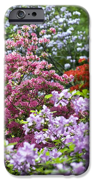 Garden Images iPhone Cases - Rhododendron Garden iPhone Case by Frank Tschakert