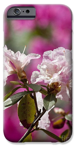 Rhododendron iPhone Case by Steven Ralser