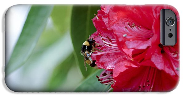 Garden Images iPhone Cases - Rhododendron With Bumblebee iPhone Case by Frank Tschakert