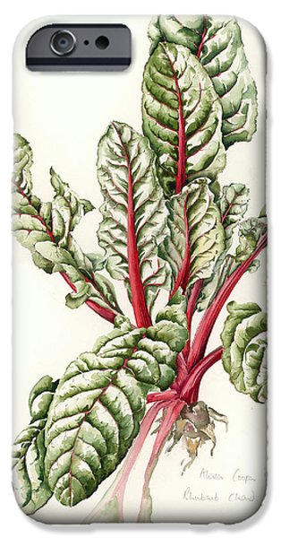 Still Life Drawings iPhone Cases - Rhubarb Chard iPhone Case by Alison Cooper