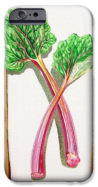Nature Study iPhone Cases - Rhubarb Tasty Botanical Study iPhone Case by Irina Sztukowski