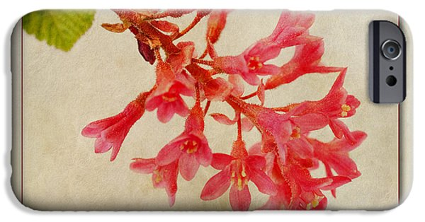 Small Digital Art iPhone Cases - Ribes sanguineum  Flowering Currant iPhone Case by John Edwards