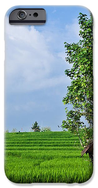 Rice Fields iPhone Case by Nila Newsom