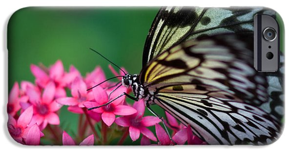 Joann Vitali iPhone Cases - Rice Paper Butterfly iPhone Case by Joann Vitali