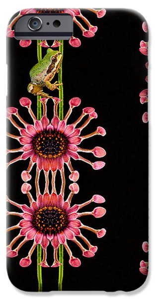 Riding frog iPhone Case by Jean Noren