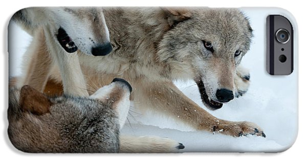 Hierarchy iPhone Cases - Right of Passage iPhone Case by Sandra Bronstein