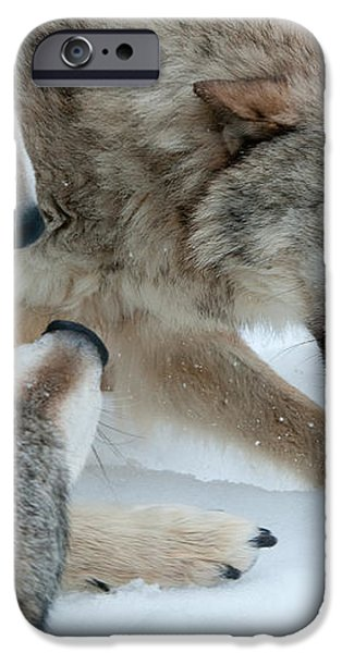 Right of Passage iPhone Case by Sandra Bronstein