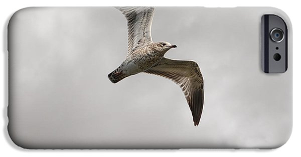 Sea Birds iPhone Cases - Ring Billed Gull At Reelfoot iPhone Case by Jai Johnson
