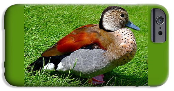 Ducks iPhone Cases - Ringed Teal Drake iPhone Case by Rona Black