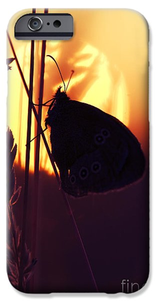Fauna iPhone Cases - Ringlet Butterfly Sunset Silhouette iPhone Case by Tim Gainey