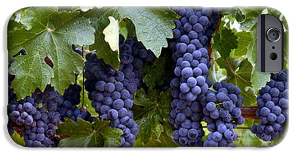 Red Wine iPhone Cases - Ripe for the Picking iPhone Case by Jon Neidert