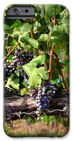 Ripening Grapes iPhone Case by Carol Groenen