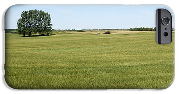 Interior Scene iPhone Cases - Ripening Wheat Field Under Blue Sky iPhone Case by Donald  Erickson