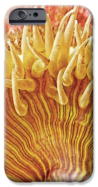 Rise and Shine Sea Anemone- Pictures of Sea Creatures - Sea Anenome  iPhone Case by Artist and Photographer Laura Wrede