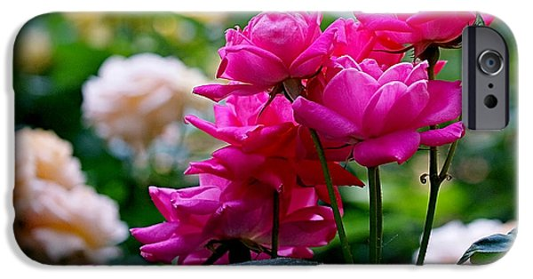 Purple Art iPhone Cases - Rittenhouse Square Roses iPhone Case by Rona Black