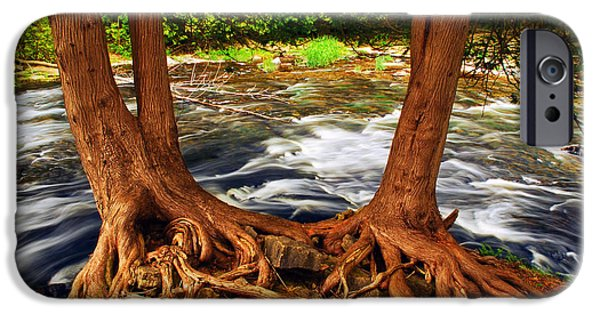 Roots iPhone Cases - River iPhone Case by Elena Elisseeva