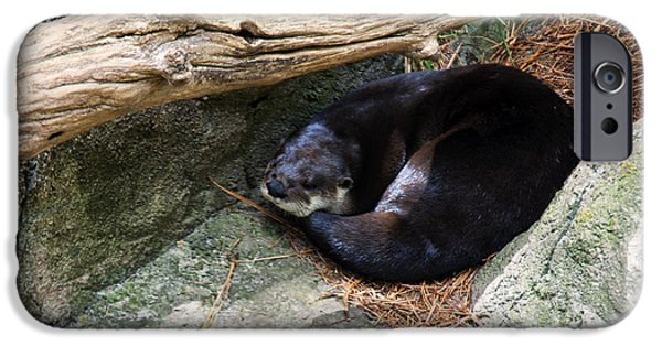 Otter Digital Art iPhone Cases - River otter resting iPhone Case by Chris Flees