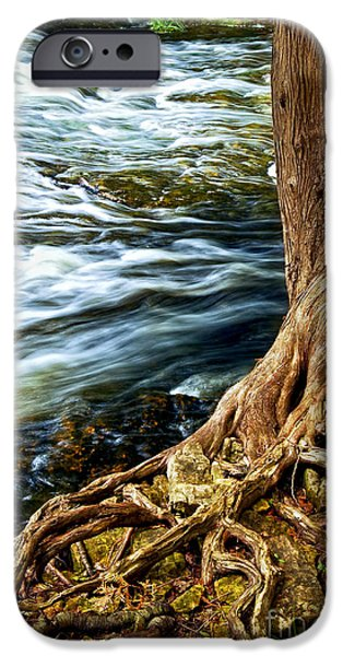 Root iPhone Cases - River through woods iPhone Case by Elena Elisseeva