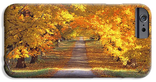 Pathway iPhone Cases - Road, Baltimore County, Maryland, Usa iPhone Case by Panoramic Images