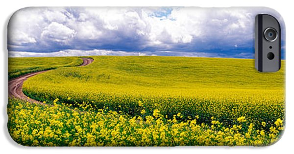 Canola Field iPhone Cases - Road, Canola Field, Washington State iPhone Case by Panoramic Images