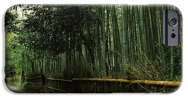Bamboo Fence iPhone Cases - Road Passing Through A Bamboo Forest iPhone Case by Panoramic Images