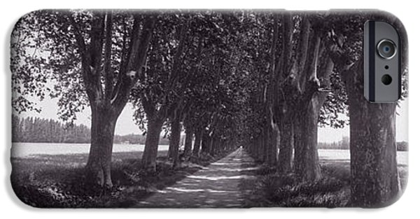 Pathway iPhone Cases - Road Through Trees, Provence, France iPhone Case by Panoramic Images