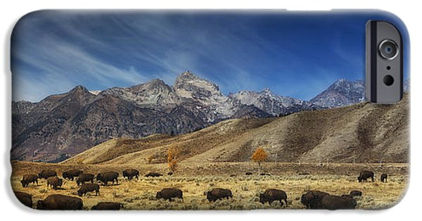 Bison Photographs iPhone Cases - Roaming Bison iPhone Case by Mark Kiver