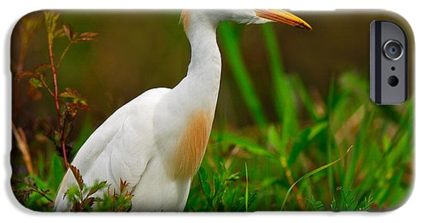 Cattle Egret iPhone Cases - Roaming Through The Field iPhone Case by Tony Beck