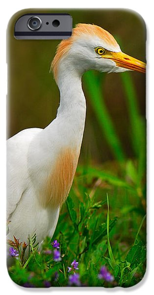 Roaming Through The Field iPhone Case by Tony Beck