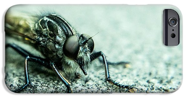 Preditor iPhone Cases - Robber Fly Awaiting Prey iPhone Case by Douglas Barnett