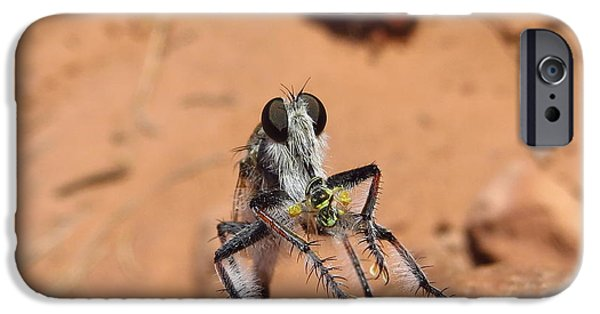 Casey iPhone Cases - Robber Fly iPhone Case by Casey Hodnett