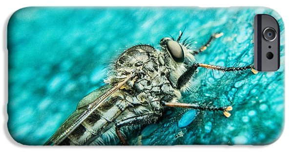Preditor iPhone Cases - Robber Fly on Blue Ceraminc Plate 1 iPhone Case by Douglas Barnett