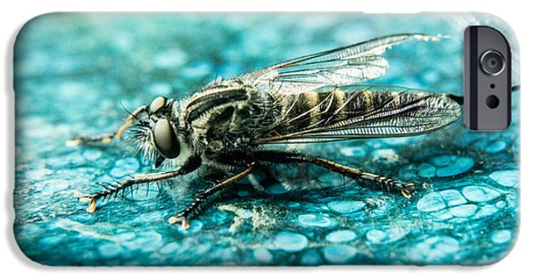 Preditor iPhone Cases - Robber Fly pm Blue Ceramic Plate iPhone Case by Douglas Barnett