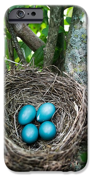 Eggs iPhone Cases - Spring Life iPhone Case by Shelby  Young