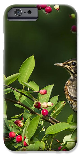 Robin and berries iPhone Case by Mircea Costina Photography